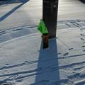 Photos: 雪の朝 横断歩道