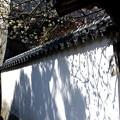 矢掛町 観照寺の梅01