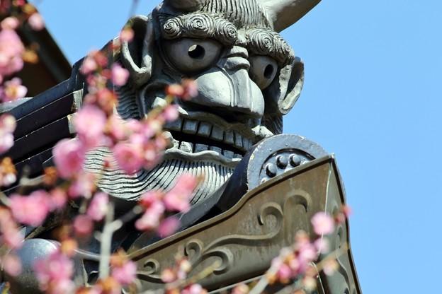 矢掛町 観照寺の梅07