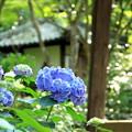 2018 浅口市寂光院の紫陽花07