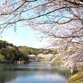 Photos: 浅口市丸山公園の桜風景08