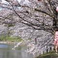 Photos: 浅口市丸山公園の桜風景05