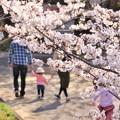 Photos: 浅口市丸山公園の桜風景03