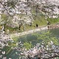 Photos: 浅口市丸山公園の桜風景02