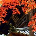曹源寺の紅葉01