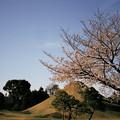 写真: Fuji and sakura