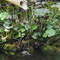 写真: カエルくんの涼