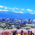 Photos: 眺望