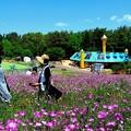 Photos: 遊園