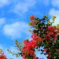 Photos: 秋の雲