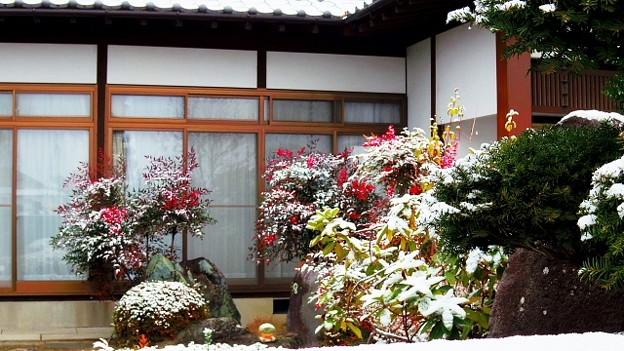 Photos: 初雪