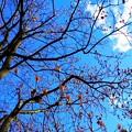 Photos: 寒日和