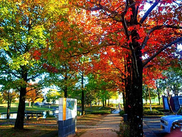 公園秋の風情