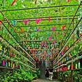 Photos: 如意輪寺風のトンネル