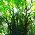 Photos: 樹齢1000年の息づかい
