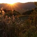 Photos: 朝日をあびて