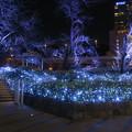Photos: 東京ガーデンテラス紀尾井町イルミネーション #4