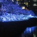 Photos: 東京ガーデンテラス紀尾井町イルミネーション #5