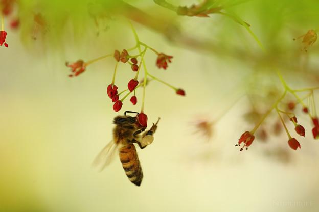 ぶら下がり蜂