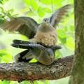 写真: 鳩の組み立て体操