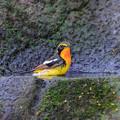Photos: 野鳥のお風呂