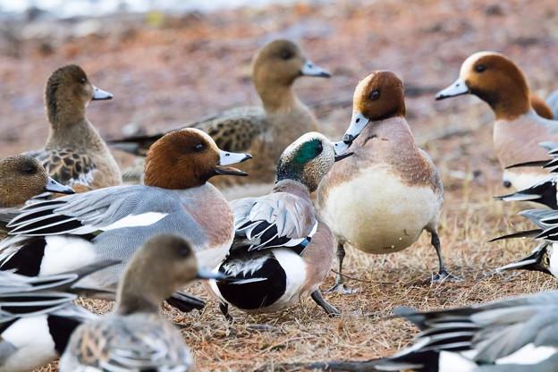 水辺の野鳥 1