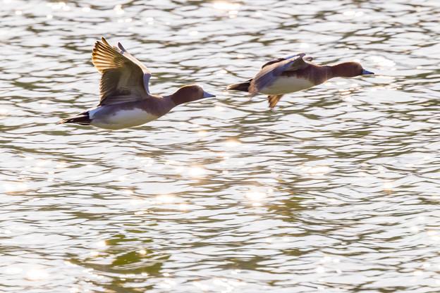 水辺の野鳥 4