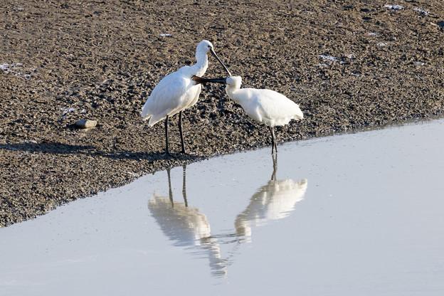 水辺の野鳥 5