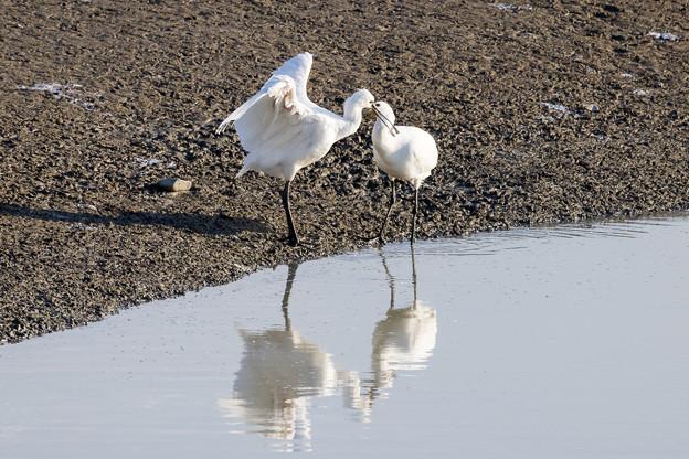 水辺の野鳥 6