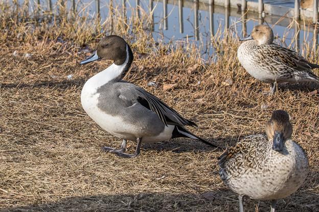 水辺の野鳥 8