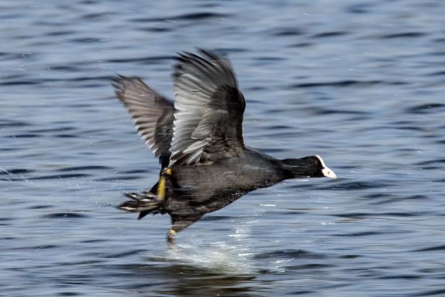 水辺の野鳥 9