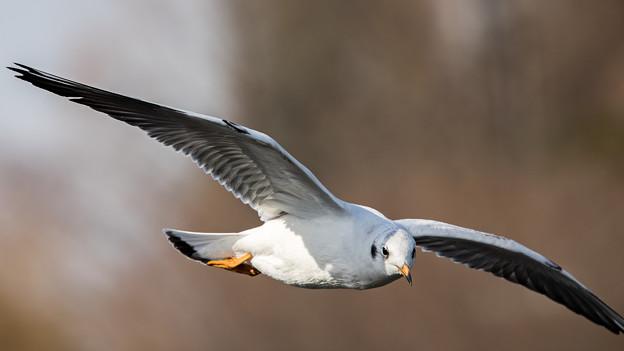 水辺の野鳥 11