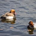 Photos: 水辺の野鳥 13(珍鳥)