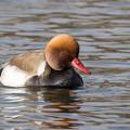Photos: 水辺の野鳥 14(珍鳥)