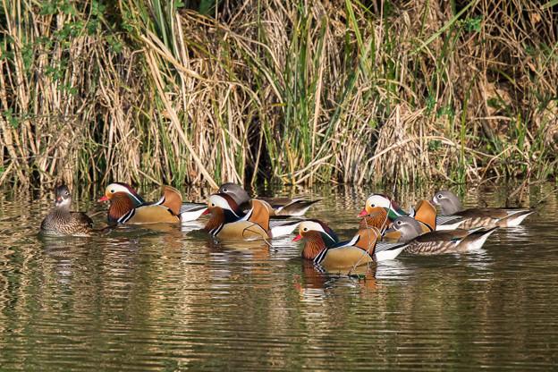 水辺の野鳥 15