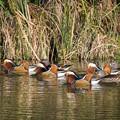Photos: 水辺の野鳥 15