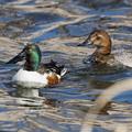 Photos: 水辺の野鳥 17