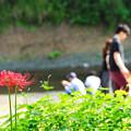 Photos: 曼珠沙華 2019 file-006