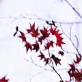 Photos: 晩秋の彩 file-003