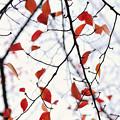 晩秋の彩 file-005
