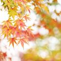 晩秋の彩 file-006