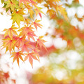 Photos: 晩秋の彩 file-006
