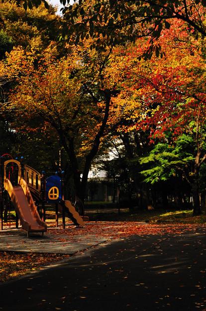 Photos: 晩秋の彩 file-008