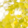 Photos: 晩秋の彩 file-011
