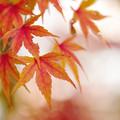 Photos: 晩秋の彩 file-012