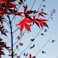 Photos: 晩秋の彩 file-014
