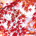 Photos: 晩秋の彩 file-016