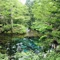 写真: 阿寒神の子池
