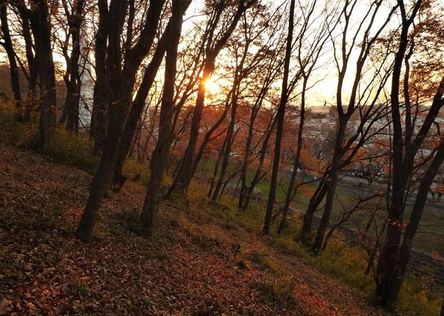 雑木林越しに富士への落日直前