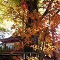 Photos: 秩父神社の紅葉